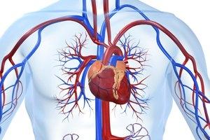 Cardio Vascular & Thoracic Surgery