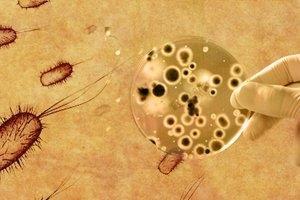 Dept. of Microbiology